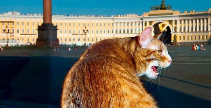 Коты-трудоголики