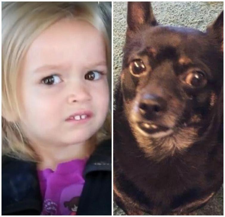 Собаки, которые очень похожи на людей