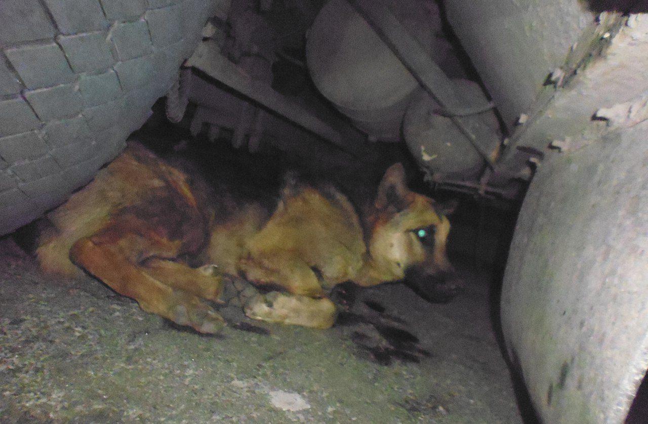 «Красавчик забился под автобус и пытался убежать ползком!» Неожиданно – волонтёры спасли очень злую собаку