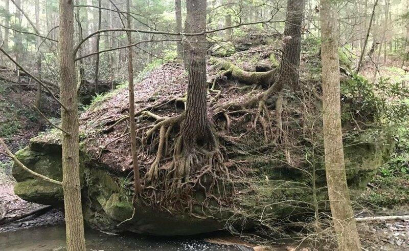 18. «У этого камня есть свой кусочек леса, растущий на нём» в мире, подборка, природа, удивительно, фото