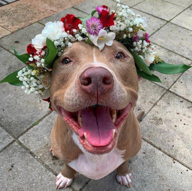 Фотографии хороших мальчиков и девочек с цветами