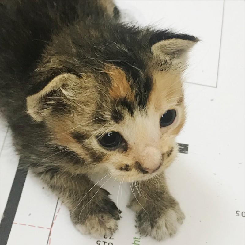 Девушка спасла котенка, который лежал в пыли на улице, а прохожие проходили мимо него