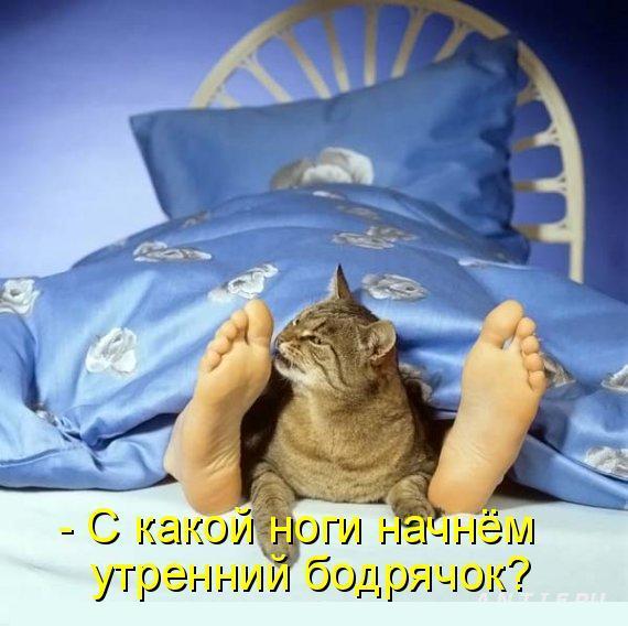 30 смешных историй про КОТОВ!)))