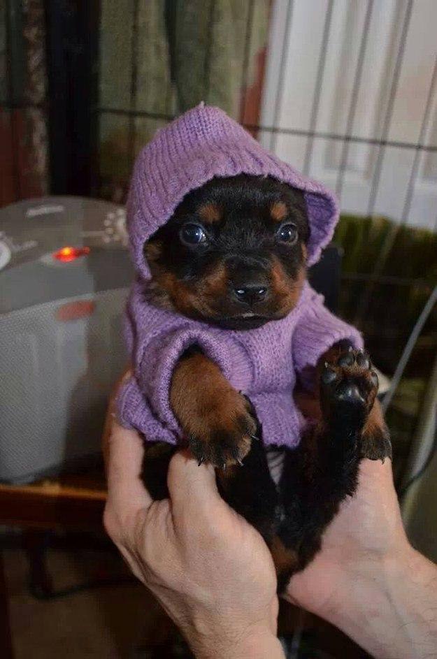 самые милые щеночки в мире (10)