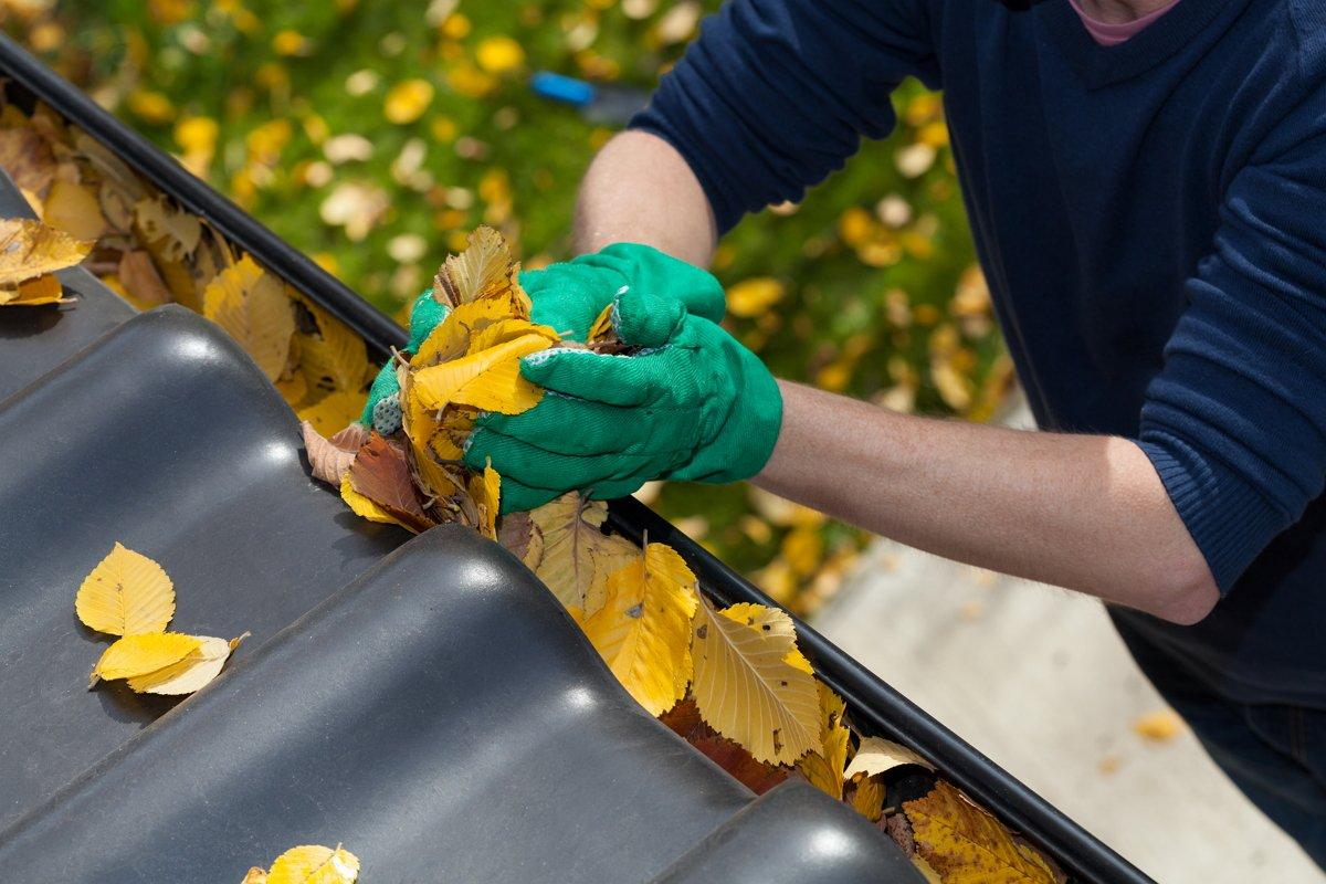 Сбор опавших листьев