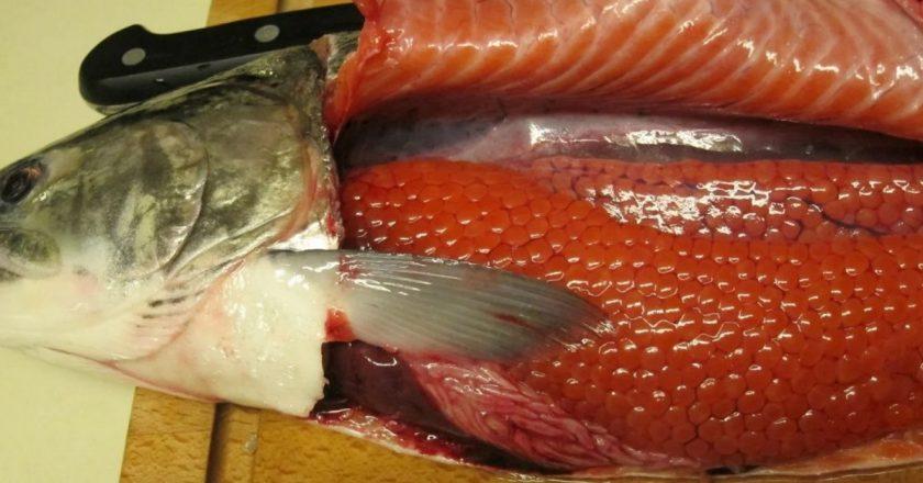 Как выбрать рыбу с икрой: 2 …