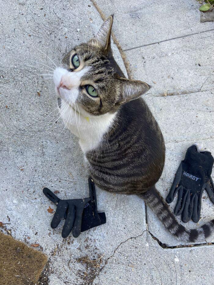 Китайский кот-клептоман стал носить домой все, что прихватил у соседей: ножницы, пакеты и проволоку Культура