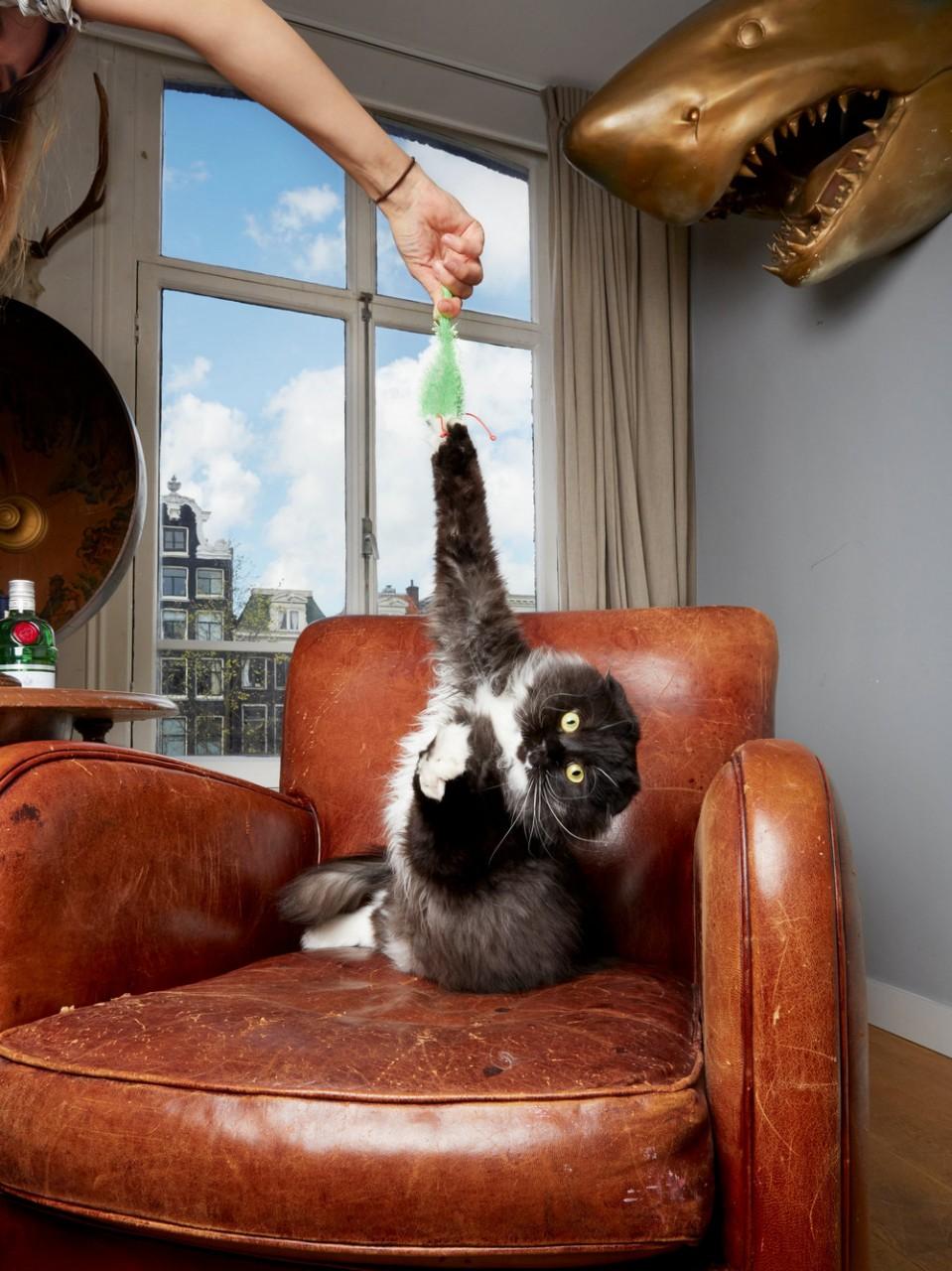 Портреты амстердамских домашних животных. Фотограф Изабелла Розендал 3