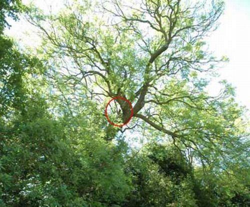 Собака на дереве