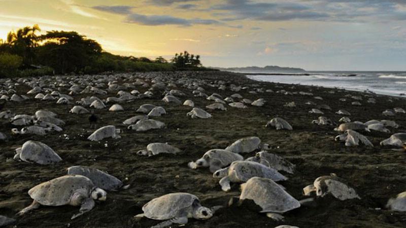 19. Плая Остионал, пляж в Коста-Рике. красивые места, прекрасная планета, чудеса природы
