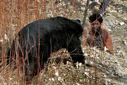 Дикий медведь ворвался в город и стал нападать на людей