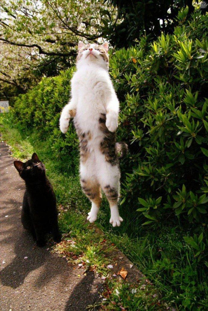 забавные смешные кошки приколы с кошками фото родители