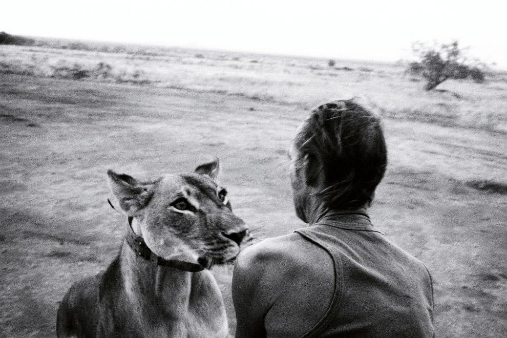 Преступное истребление диких животных