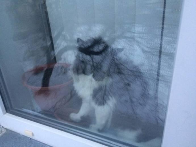В Озёрске помогли застрявшему в окне коту