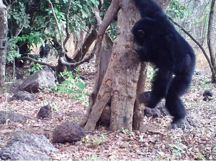 «Мы присутствуем при зарождении религии у обезьян!»