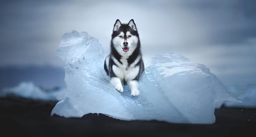 Alicja zmyslowska dog photographs 16 %281%29