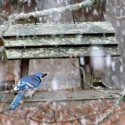 Виды кормушек для птиц своими руками фото фото 375