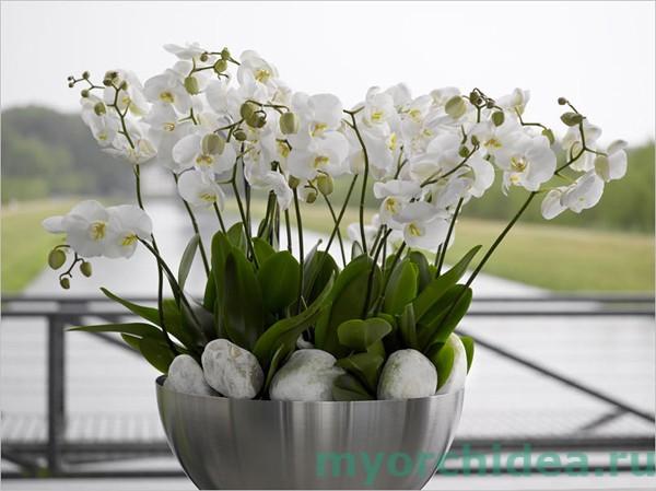 Орхидея: уход, основные правила