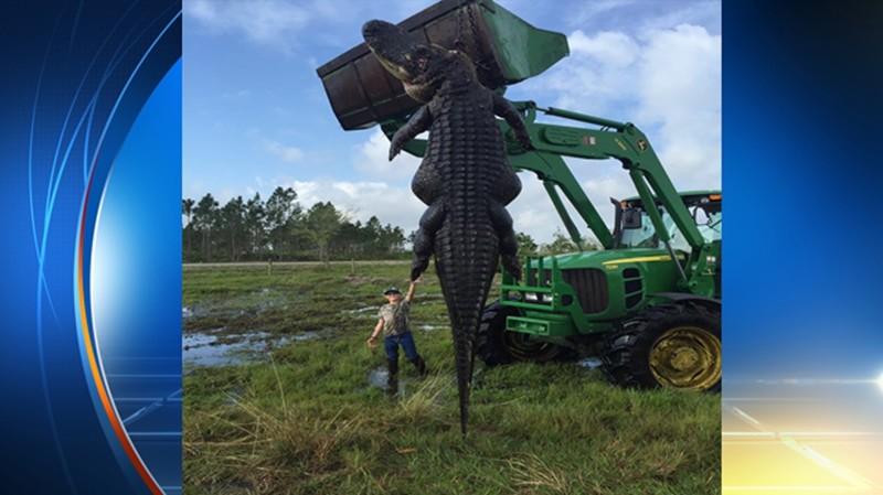 8. Гигантский аллигатор вид, вымысел, гигант, животные, мир, правда, природа, фото
