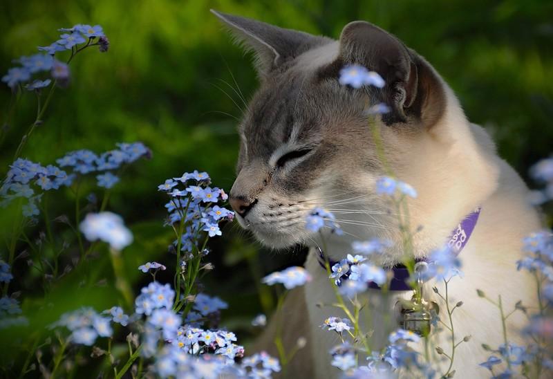 8 фактов о лечебных свойствах просмотра видео с котами