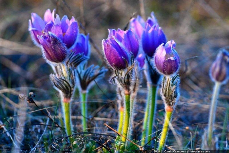 Расцветающее растение весной фото