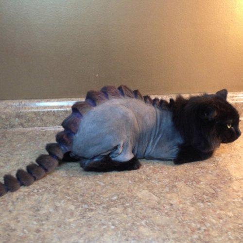 Когда хочется иметь собственного дракона, но дома есть только котейка DinoCut