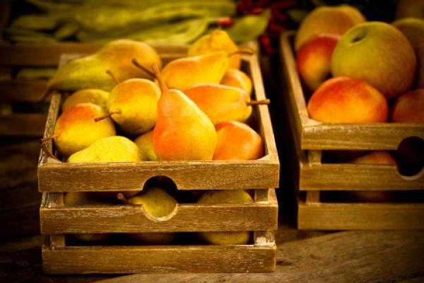 Не загубите урожай: свежие яблоки и груши всю зиму