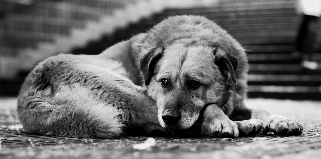 Бездомный пёс спас девушку, …