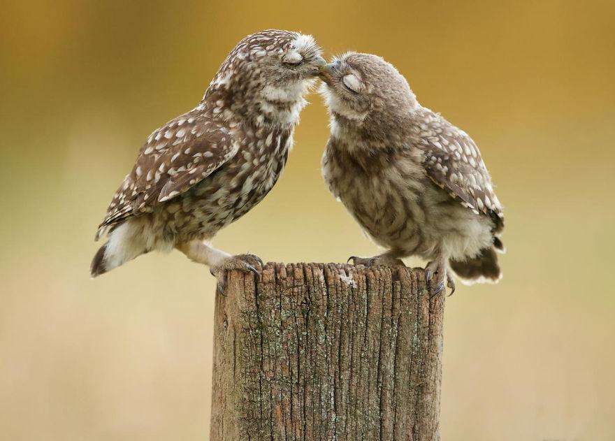 фото поцелуя птички пола обоями это
