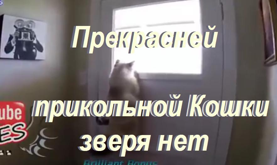 Прекрасней  Прикольной Кошки Зверя нет!