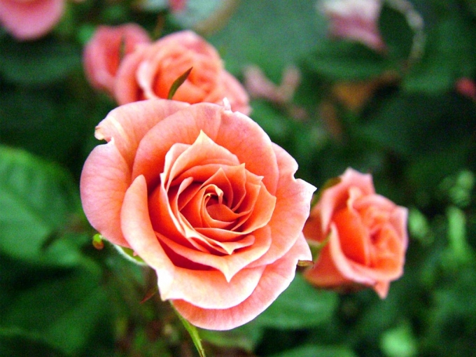 Цветы с чужой клумбы