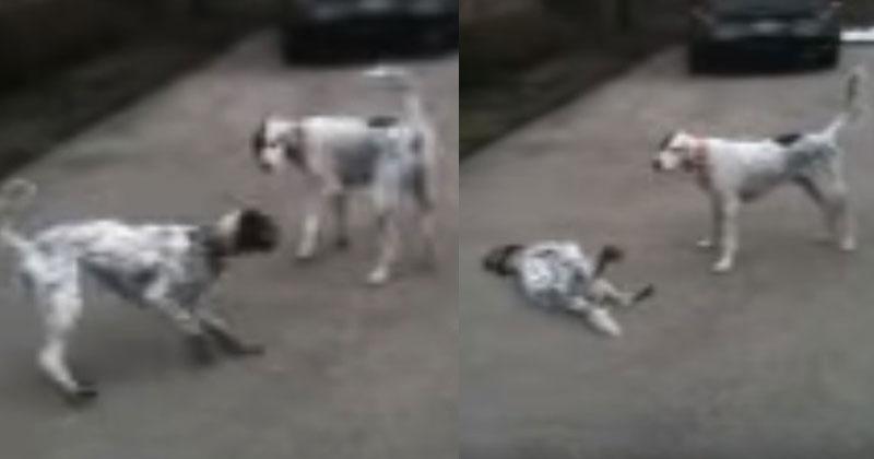 Две собаки играли, когда оди…