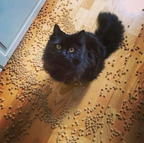 Кошки-хулиганки, пойманные с поличным