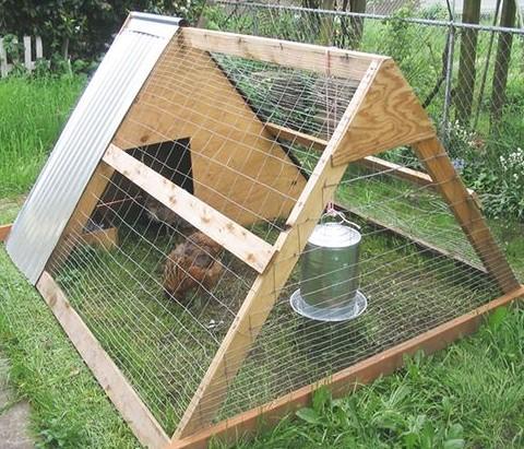 уход за курицами на даче дело том, что