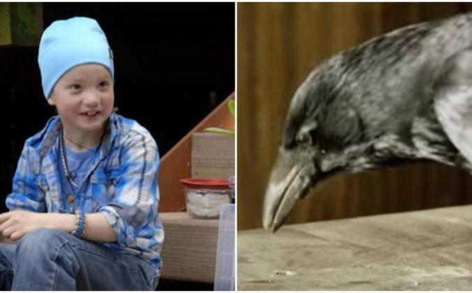 Девочка подружилась с воронами, и птицы засыпали её подарками