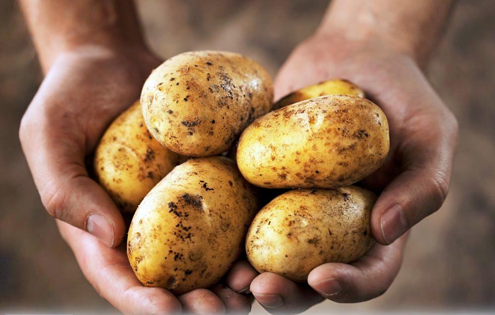Профилактические меры по спасению картофеля