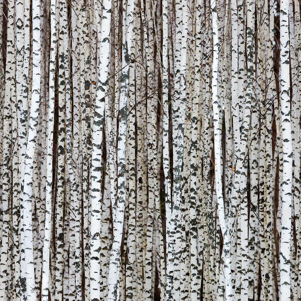 Победители и фавориты фотоконкурса «Дикая природа России – 2018» 34
