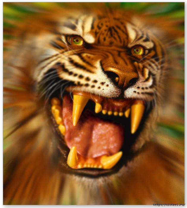 Невероятный животный мир Юрека Замойского