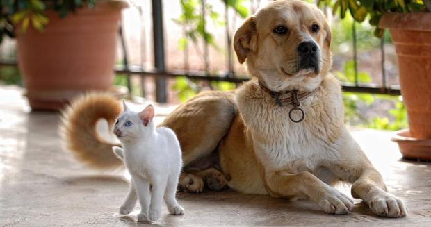 Важно знать: фэн-шуй и домашние животные