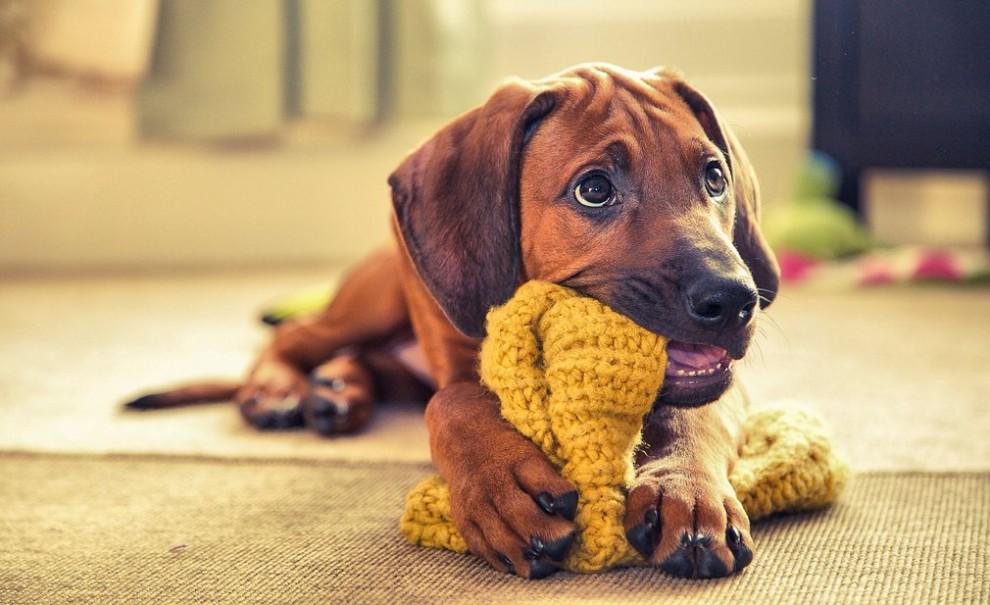 распределения патронов самые лучшие картинки с собаками того чтобы