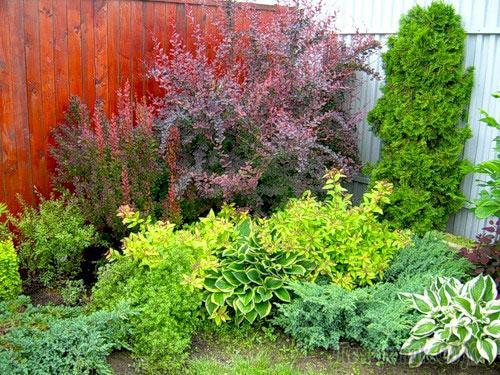 Тень да тень кругом: что посадить в темном уголке сада