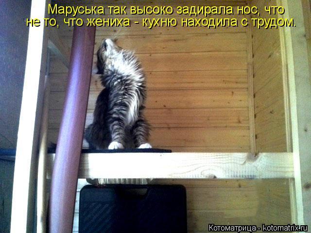 Котоматрица: Маруська так высоко задирала нос, что не то, что жениха - кухню находила с трудом.