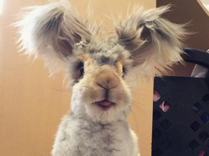 Уолли — кролик с самыми боль…