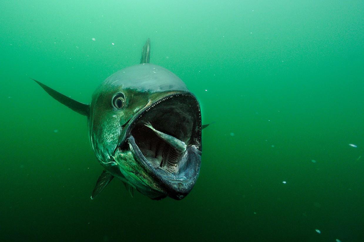 Редкие подводные кадры исчез…