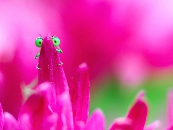 Любопытные стрекозы в неожид…