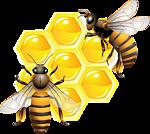 Есть пчёлы и осы. Анна Кирьянова