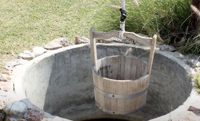 Два щенка упали в яму с королевской коброй: змея охраняла их сутки и ждала людей Культура