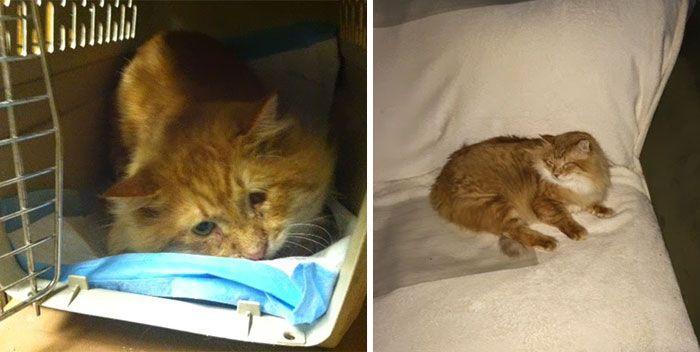 Бывшие бездомные коты до и после, кошки, преображение