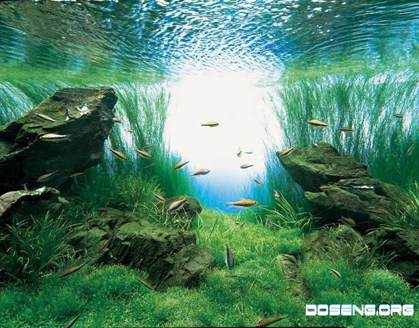 Маленький океан у тебя дома …