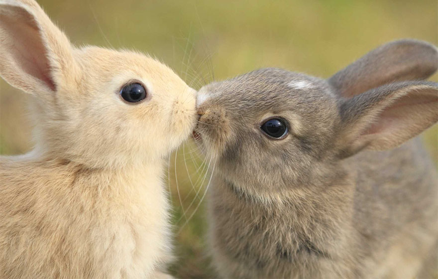 зайчики целуются фото убывающей